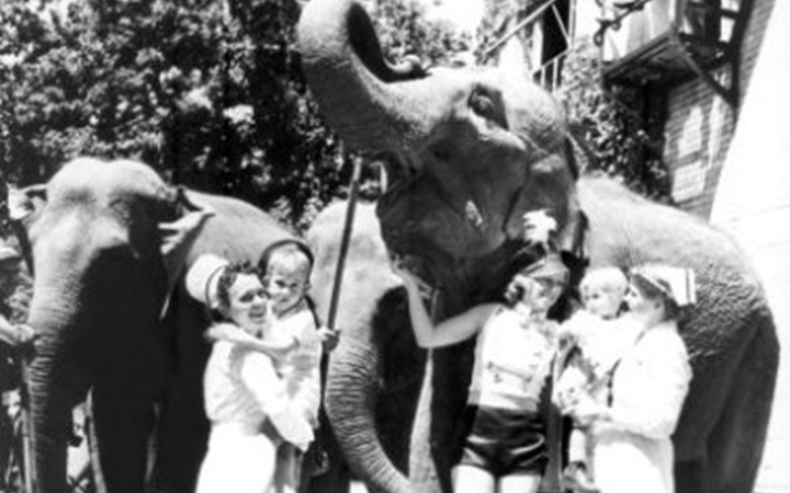 A black and white photo of two nurses in white dresses and white hats holding young patients while talking to a female circus performer wearing black shorts, a white sleeveless shirt and black hat with a feather. The circus performer holds onto a large elephant and there are two smaller elephants standing behind them.