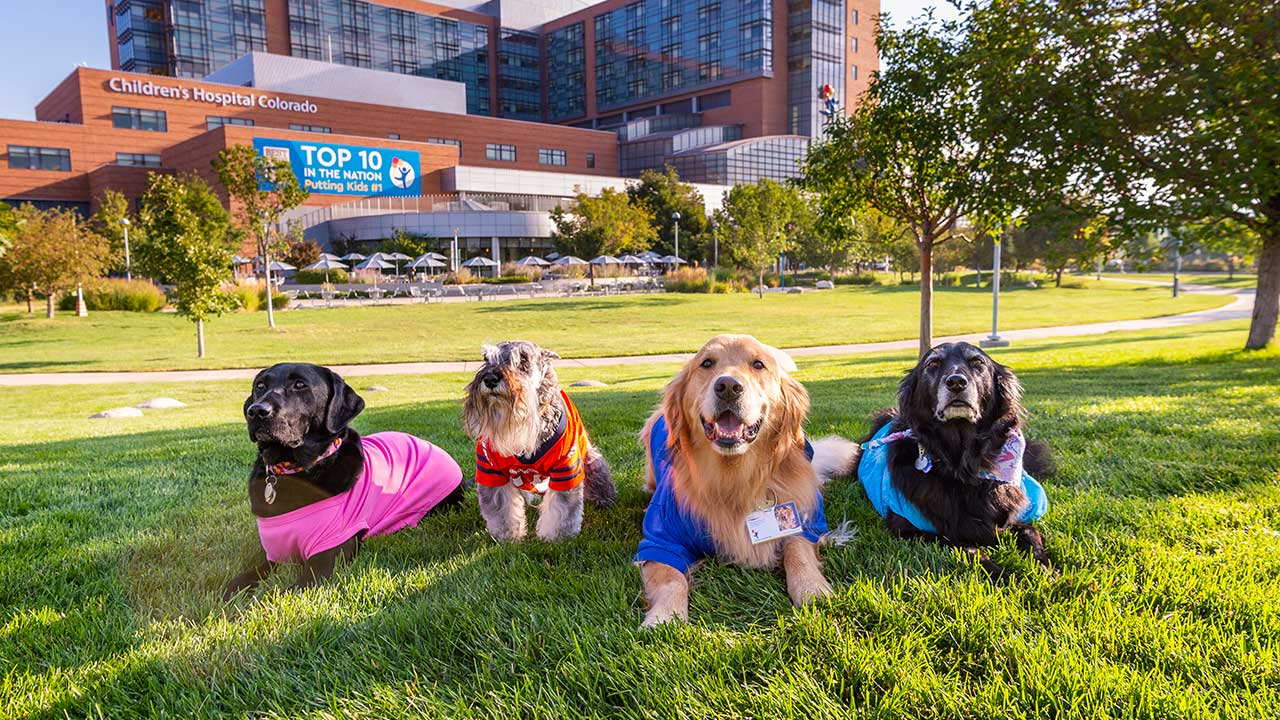 A black lab, miniature schnauzer, golden retriever and lab/golden mix pose in front of Children's Hospital Colorado in Aurora. These dogs and their owners visit patients in the hospital.